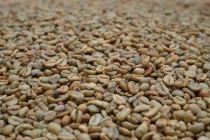 Gayo Natural Green Bean